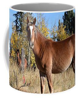 Horse Cr 511 Divide Co Coffee Mug