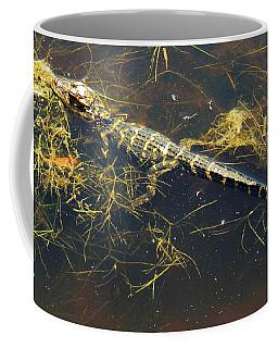Juvenile Alligator Coffee Mug