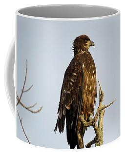 Juvenile Bald Eagle 1 Coffee Mug