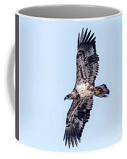 Juvenile Bald Eagle 2017 Coffee Mug