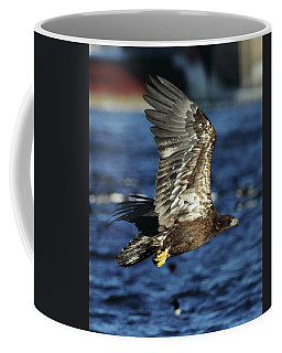 Juvenile Bald Eagle Over Water Coffee Mug