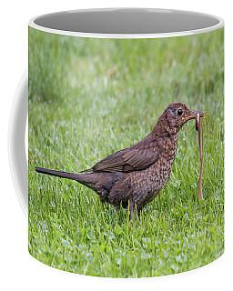 Juvenile Blackbird - Turdus Merula Coffee Mug