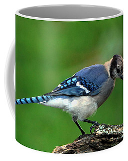 Juvenile Blue Jay  Coffee Mug