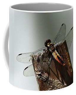 Coffee Mug featuring the photograph Juvenile Chalk Fronted Corporal by Sally Sperry