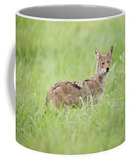 Juvenile Coyote Coffee Mug