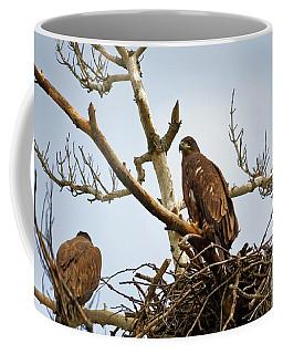 Juvenile Eagles Coffee Mug