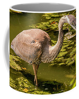 Juvenile Great Blue Heron Coffee Mug