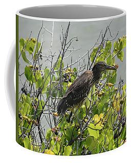Coffee Mug featuring the photograph Juvenile Heron In Tree by Pamela Walton