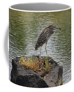 Coffee Mug featuring the photograph Juvenile Heron by Pamela Walton
