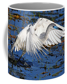 Juvenile Little Blue Heron Coffee Mug