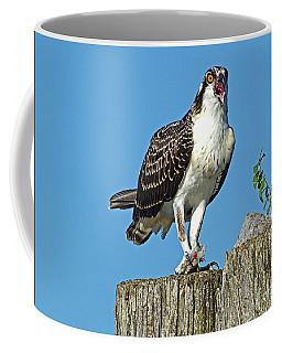 Juvenile Osprey#1 Coffee Mug by Geraldine DeBoer