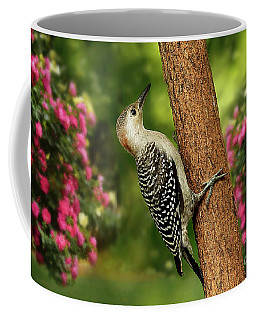 Coffee Mug featuring the photograph Juvenile Red Bellied Woodpecker by Darren Fisher