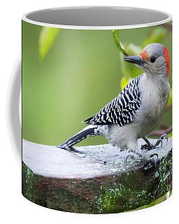 Juvenile Red-bellied Woodpecker In The Rain Coffee Mug