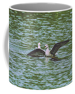 Coffee Mug featuring the photograph Juvenile Seagull In A Water by Jacek Wojnarowski