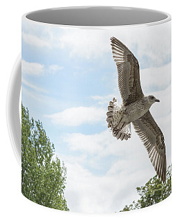 Coffee Mug featuring the photograph Juvenile Seagull In Flight by Jacek Wojnarowski