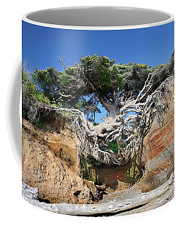 Kalaloch Tree Of Life Coffee Mug