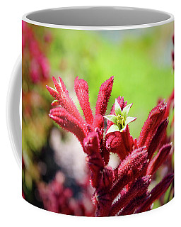 Coffee Mug featuring the photograph Kangaroo Paws by Alison Frank
