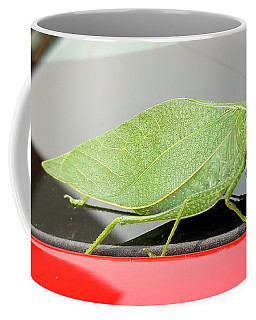 Katydids- Bush Crickets Coffee Mug