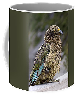 Kea Bird Coffee Mug by Sally Weigand