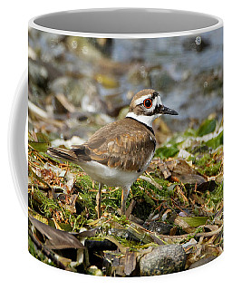 Killdeer At The Coast Coffee Mug