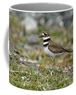 Killdeer On Shoreline Grasses Coffee Mug