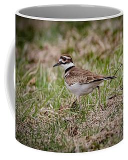 Killdeer Coffee Mug by Ray Congrove
