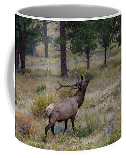 King Of The Pines  Coffee Mug