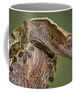 Coffee Mug featuring the photograph King Of The Mountain - Crested Gecko by Nikolyn McDonald