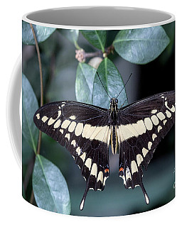 King Swallowtail Coffee Mug