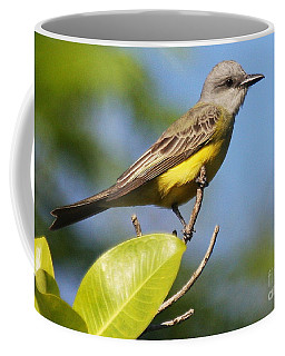 Kingbird Perched Coffee Mug by Myrna Bradshaw