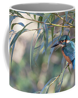 Kingfisher In Willow Coffee Mug