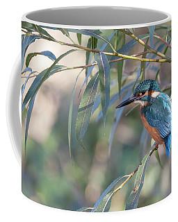 Kingfisher In Willow Coffee Mug