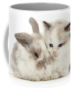 Kitten Cute Coffee Mug