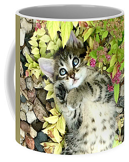 Kitten Dreams Coffee Mug