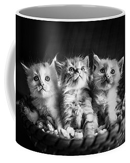 Kitten Trio Coffee Mug