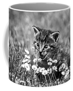 Kitten With Daisy's Coffee Mug