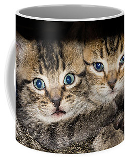 Kittens In The Shadow Coffee Mug