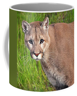 Kitty Look Coffee Mug