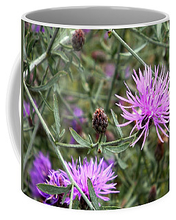 Coffee Mug featuring the photograph Knapweed by Danielle R T Haney
