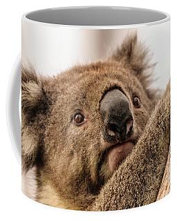 Koala 3 Coffee Mug by Werner Padarin