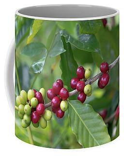 Kona Coffee Cherries Coffee Mug