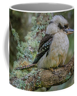 Kookaburra 4 Coffee Mug
