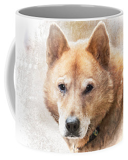 Korean Jindo Portrait Coffee Mug