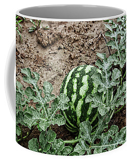 Ky Watermelon Coffee Mug