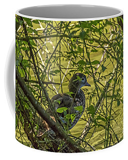 Coffee Mug featuring the photograph Lady Wood Duck II by Kate Brown