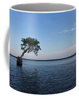 Lake Disston Cypress #2 Coffee Mug by Paul Rebmann