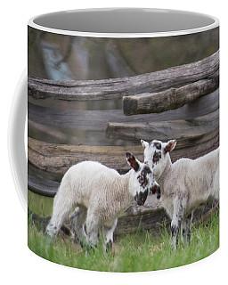 Lambs Playing Coffee Mug