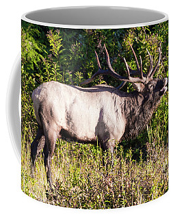 Large Bull Elk Bugling Coffee Mug