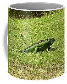 Large Sanibel Iguana Coffee Mug