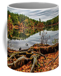 Coffee Mug featuring the photograph Large Tree Roots by Lilia D